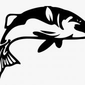 Very NEW version - Fish For Food / BINGEN ( feat Reno acc guitar)